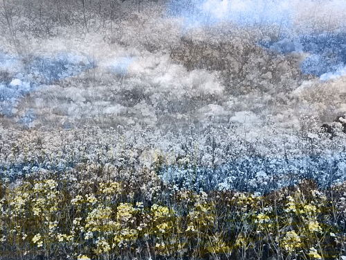 bleu, jaune, pluie / yellow, blue, rain - nature photography and digital Ar - © Doris Stricher